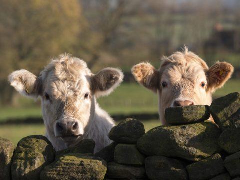 UK REDEFINES AGRICULTURE